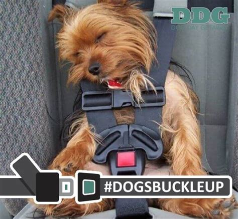 best seat belt harness for dogs what is the best car seat harness for dogs