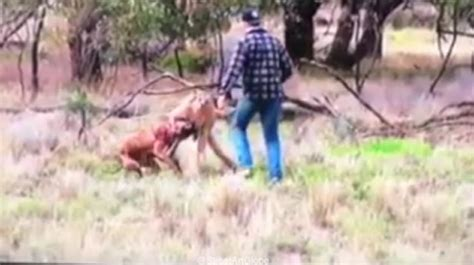 kangaroo with in headlock machiam ufc rains blows on another while children scream and try to