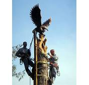 Chainsaw Carving Artist Scott Dow Studio Carvings Care