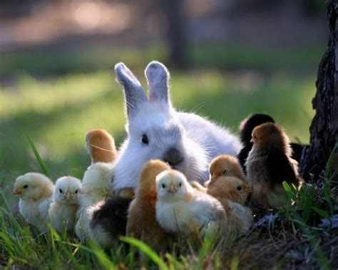 cute rabbits and chicks springtime bunnies and chicks things that make me happy