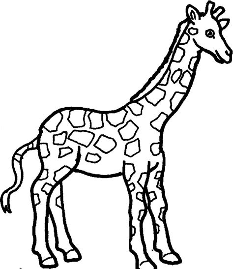 Printable Giraffe Coloring Pages Coloring Me Giraffe Coloring Pages Printable