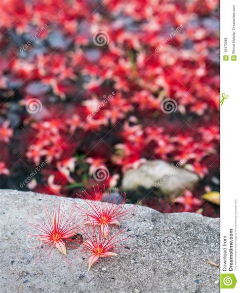 pink flower floor l red tummy wood flower on the floor stock image image of