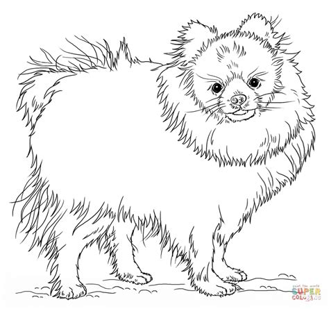 Chihuahua Coloring Page Az Coloring Pages Pomeranian Coloring Pages