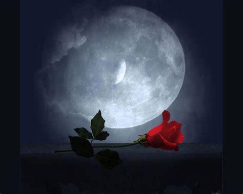imagenes romanticas bajo la luna las fotos mas alucinantes luna y rosas