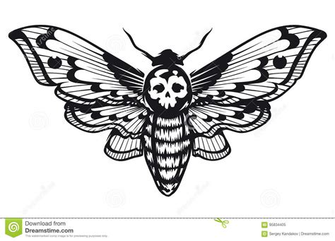 deaths head hawk moth stock vector illustration of white
