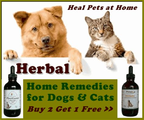 new choices in healing for dogs cats herbs acupressure homeopathy flower essences diets healing energy books arthritis and pets www relieve joint inflammation