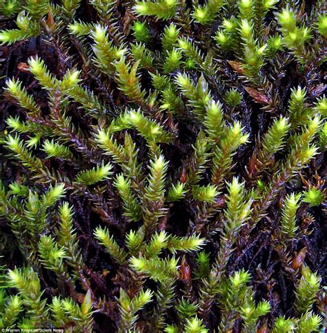 how many types of mosses are there it moss be magic up photographs of trees that look so beautiful they could be daily