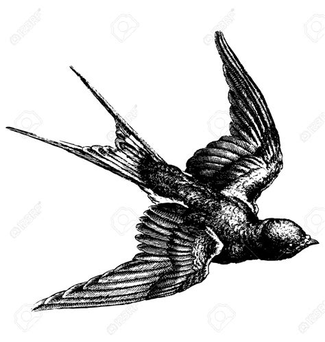 drawing of a flying bird drawing art ideas