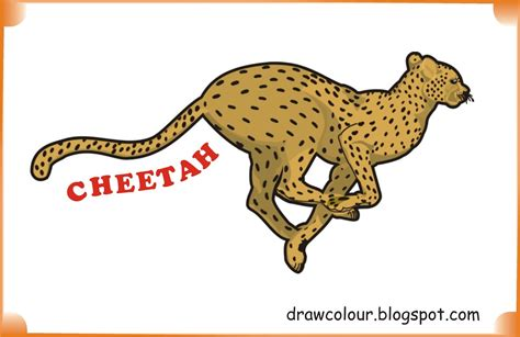 what color is a cheetah cheetah coloring pages paper