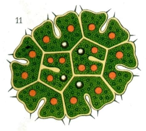 1000 Images About Keyhole Gardens On Pinterest Gardens Keyhole Garden Layout
