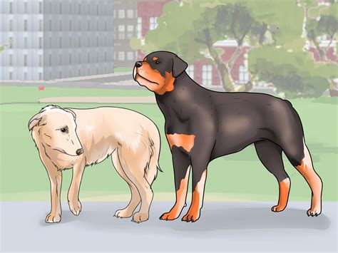 how to two dogs to walk on a leash how to walk two dogs at the same time on leashes 14 steps