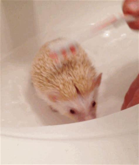 number one bathroom hedgehog bath time pins and procrastination