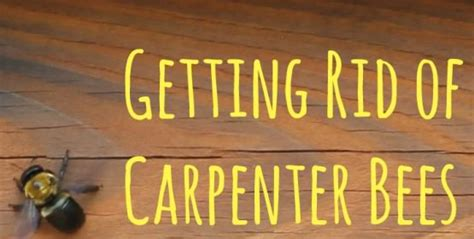 how to get rid of a beehive in your backyard how to get rid of carpenter bees learn how to