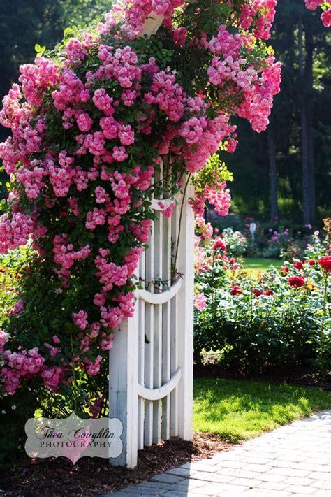 trellis roses trellis jpg 600 215 900 pixels for the home