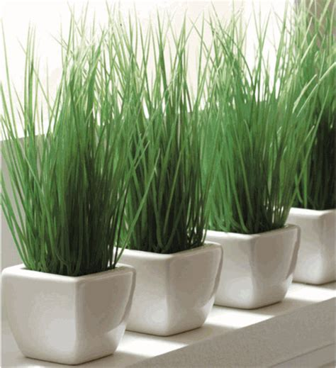 modern planters indoor potted wheat grass modern indoor pots and planters by organize