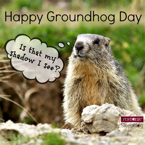 groundhog day what does it groundhog day what s it got to do with sleep restonic