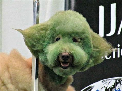 dog haircuts gone really wrong dog grooming gone wrong page 3 of 15