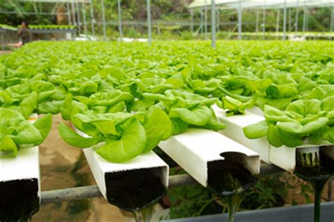 hydroponic gardening primer grow  blog mother