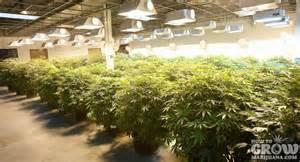 how to grow marijuana indoors