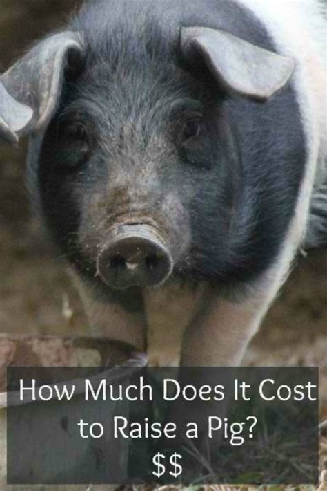how much does it cost to have a couch reupholstered how much does it cost to raise a pig specific needs and
