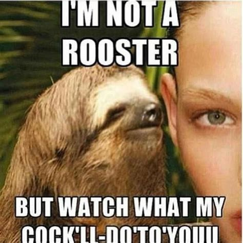 Funny Sloth Pictures Meme - 75 best images about inappropriately hilarious sloth on