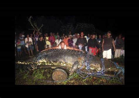 imagenes raras que dan miedo encontrado el cocodrilo m 225 s grande del mundoexpreso de