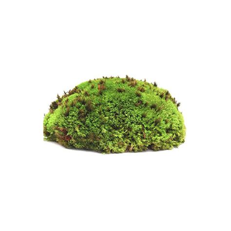 Pillow Moss by Galapagos Pillow Moss