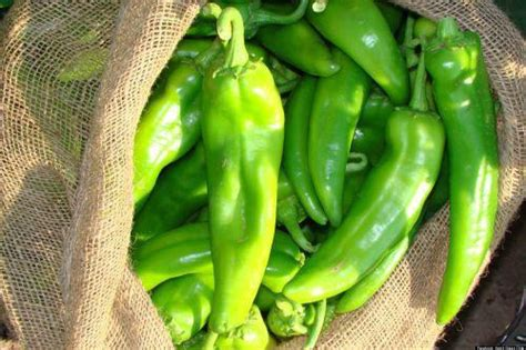 new mexico green chile this enchilada recipe will keep