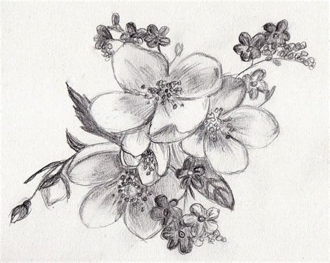 Sketches Flowers by Easy Sketches Of Flowers Rainbow Smudge Sketches