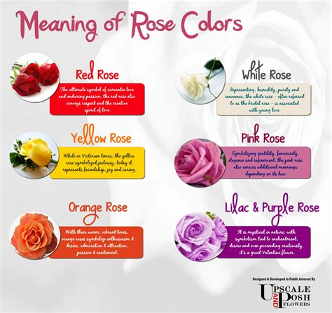 roses colors meaning meaning of colors visual ly