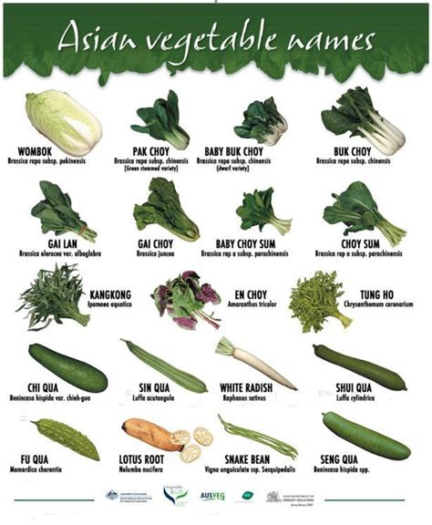 vegetables with english names all vegetable names with pictures and in english urdu