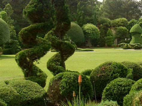 Topiary Gardens by Pearl Fryar S Topiary Garden A Cut Above Average