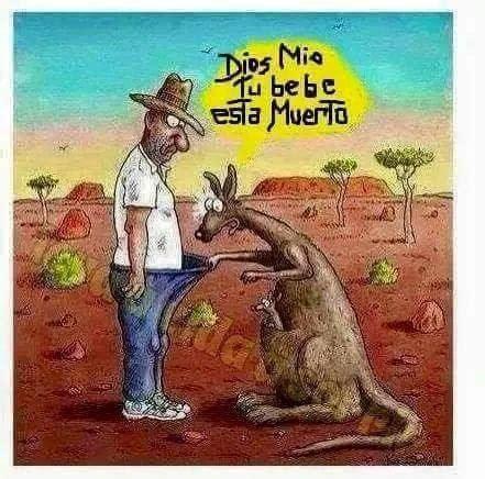 imagenes opticas groseras dios m 237 o tu bebe esta muerto hombre vs canguro
