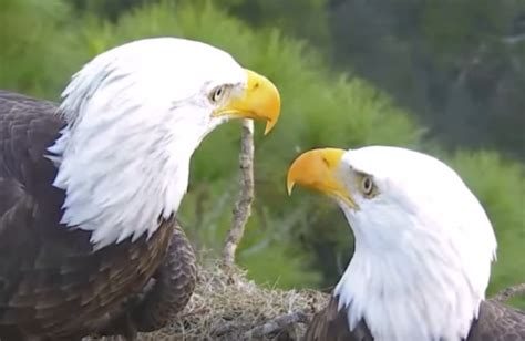 symbolic 9 11 house of the week northeast fl eagle cam