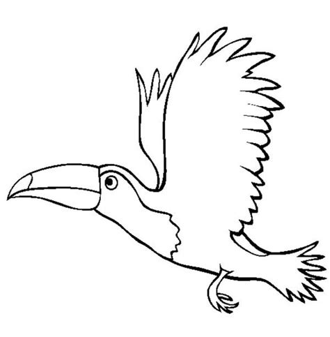 flying toucan coloring page coloring sun