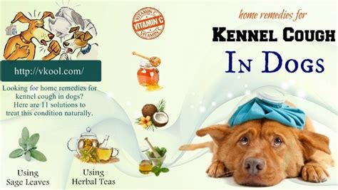 puppy kennel cough home remedies top 11 best home remedies for kennel cough in dogs