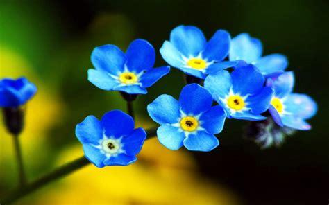 fiori queneau da seven i fiori per il gruppo di lettura il