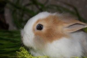 alimentazione coniglio testa di coniglio testa di carattere alimentazione e