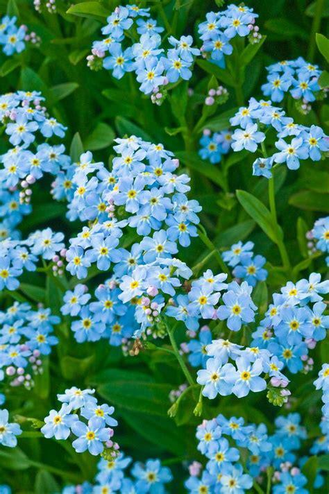 25 best ideas about flowers garden on flower