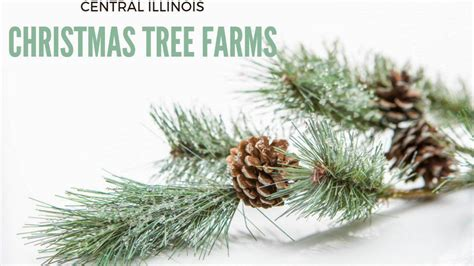 christmas tree farm central il where to buy your tree in central illinois family herald review