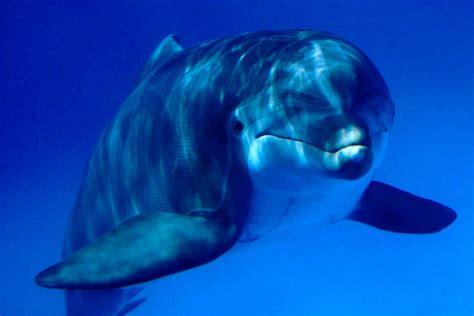 imagenes para fondo de pantalla delfines fondo pantalla delfin