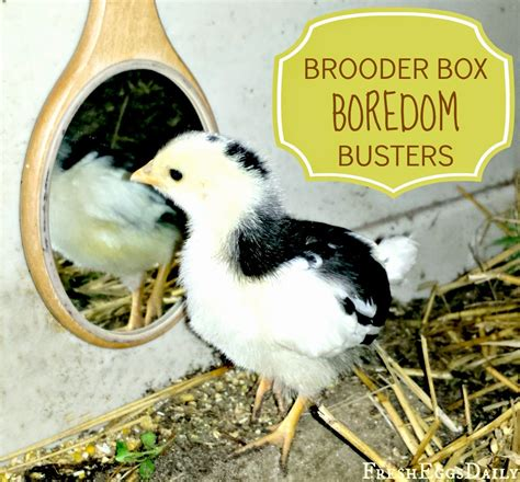 for coop 8 brooder box boredom busters for baby