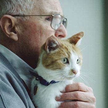 remove cat dander from couch removing cat dander from house how to remove cat dander fast
