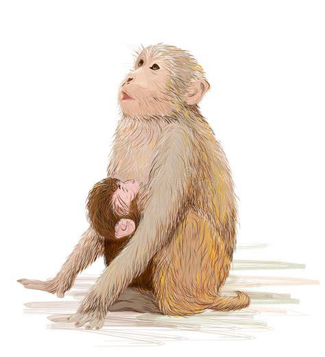 neonato alimentazione neonato d alimentazione della scimmia illustrazione