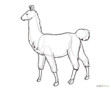 sketchbook lama llama drawing www pixshark images galleries