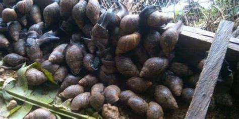 small farming business ideas 24 profitable agricultural farming businesses small