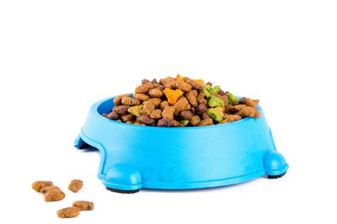 pit food cat food free stock photo domain pictures
