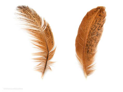 feather with hd wallpapers hd wallpapers high definition hd quality