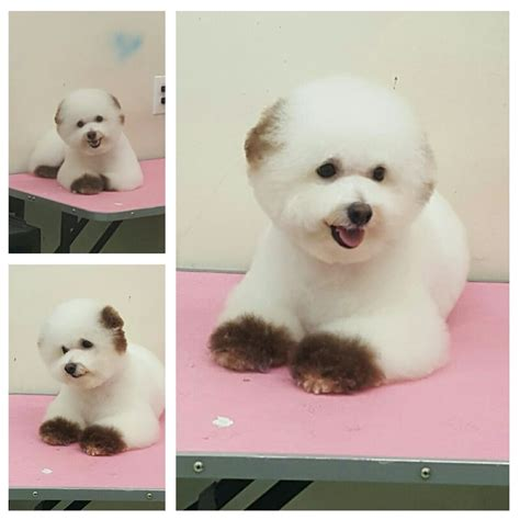 ny puppy club one of our regulars here at ny puppy club doo boo done by sori yelp