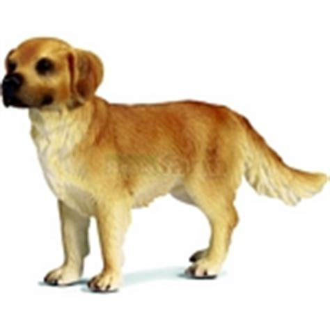 golden retriever puppies cost in delhi alimentos para perros golden retriever puppies cost in